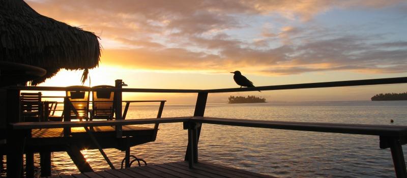 Tahiti... Paradisos al teu abast